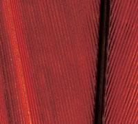 fasadi-bonarty-1-dver88